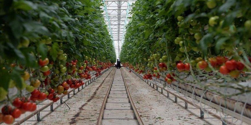 Türkiye'den yılın 3 ayında 128 milyon 909 bin dolarlık domates ihracatı