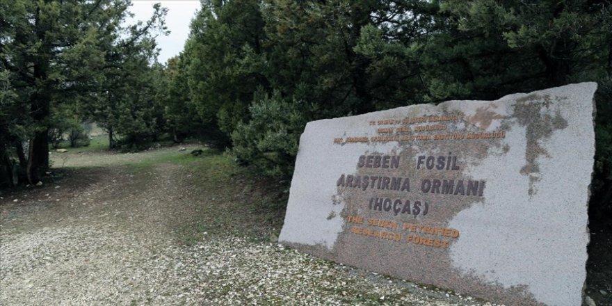 Türkiye'nin ilk 'fosil ormanının' UNESCO Dünya Miras Listesi'ne alınması için çalışma başlatıldı