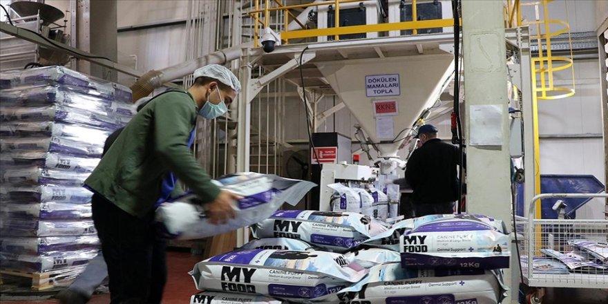 Türkiye kedi ve köpek maması ihracatından 176 milyon dolar kazandı