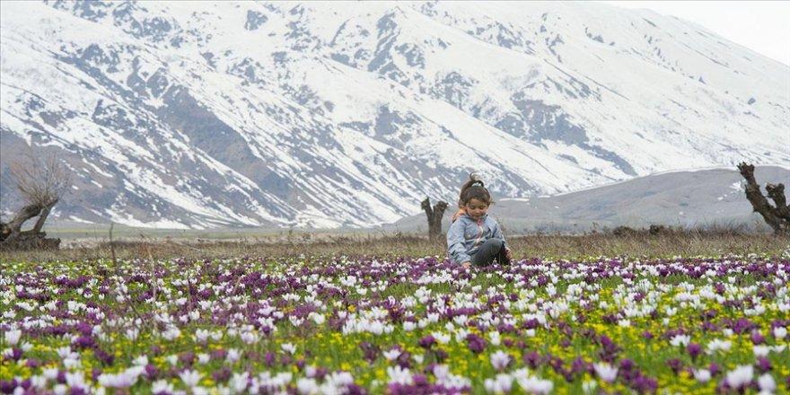Tunceli'nin ovaları kardelen, nergis ve düğün çiçekleriyle rengarenk oldu