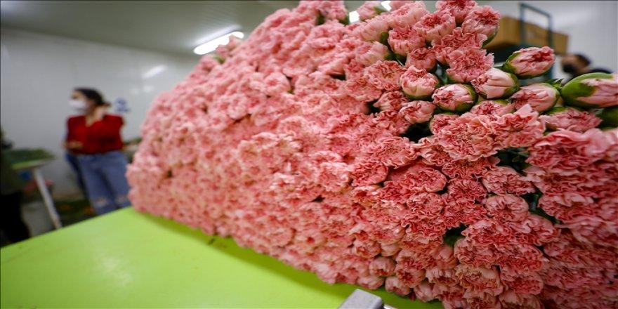Çiçek sektörü ihracatında 'Anneler Günü' bereketi yaşanıyor