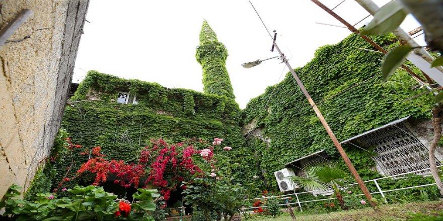 'Yeşil cami' baharda açan çiçekleri ve sarmaşıklarıyla botanik bahçesini andırıyor