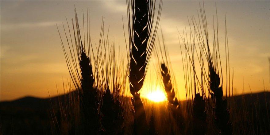 Konya'da çiftçiler Cumhurbaşkanı Erdoğan'ın açıkladığı hububat alım fiyatlarından memnun
