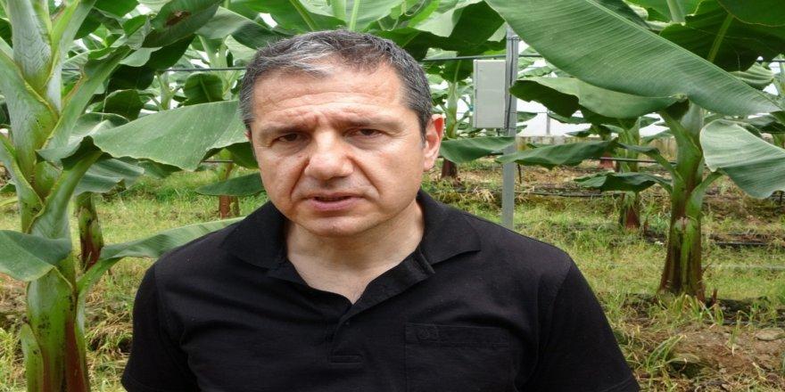 Prof. Dr. Sert: 'Muz seraları toprağı verimsizleştirip yer altı sularımızı tüketiyor'