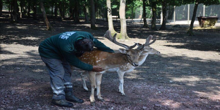 Yaralı yabani hayvanların bakım ve tedavisi Ormanya'da emin ellerde
