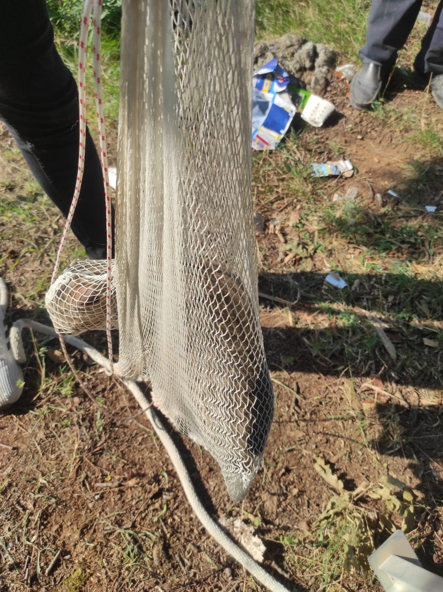 Gebzede Ağaçta mahsur kalan kediyi itfaiye kurtardı