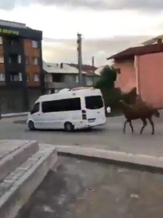 Gebze'de hayvana işkence ! Kilometrelerce sürüklendi