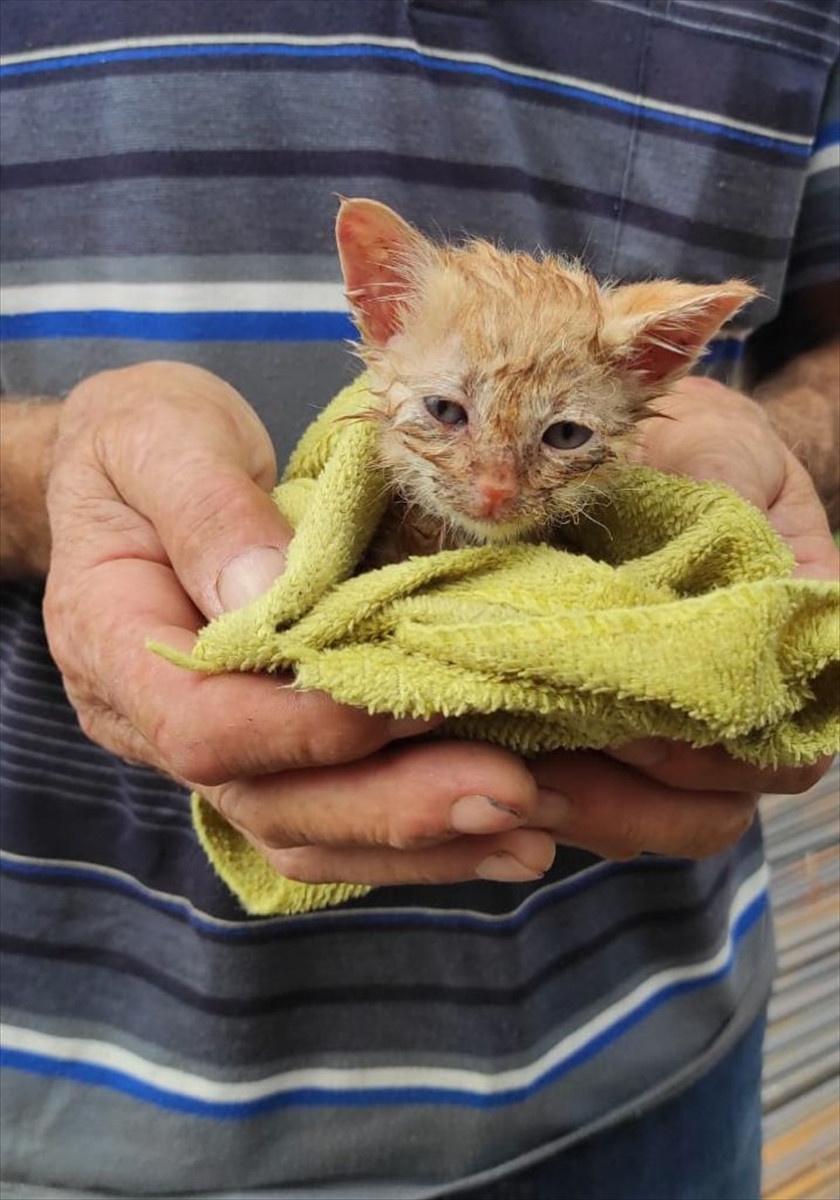 Gebzede kafası demir boruya sıkışan kediyi itfaiye kurtardı