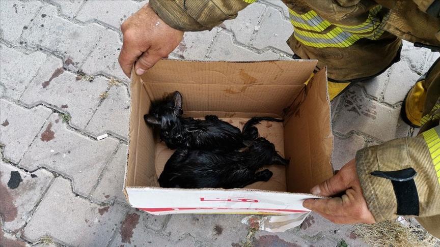 Esenyurt'ta itfaiye erleri yangın çıkan binada dumandan etkilenen kedileri kurtardı