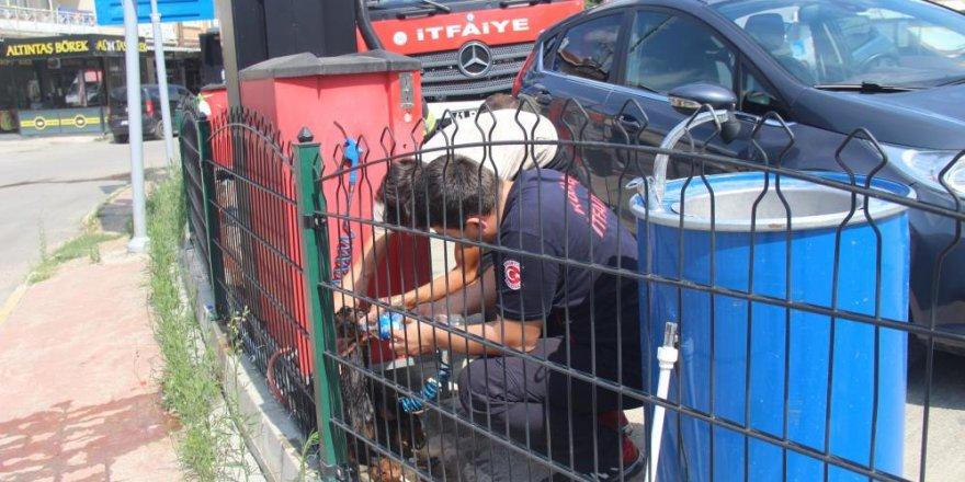 Petrol istasyonunun çevre tellerine sıkışan doberman için seferber oldular