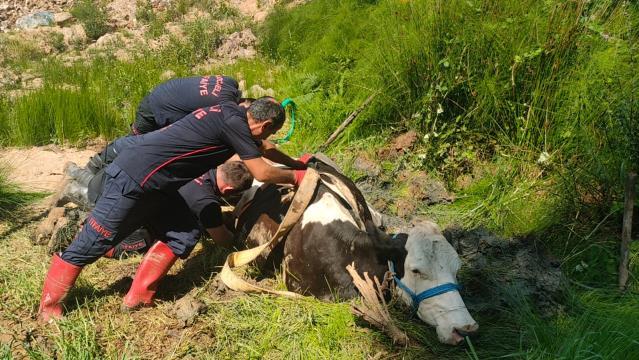 Çayırova Bataklığa saplanan inek itfaiye ekiplerinin kurtarıldı