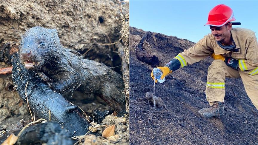 Adana'daki orman yangınında 2 sansar yavrusunu orman işçileri kurtardı