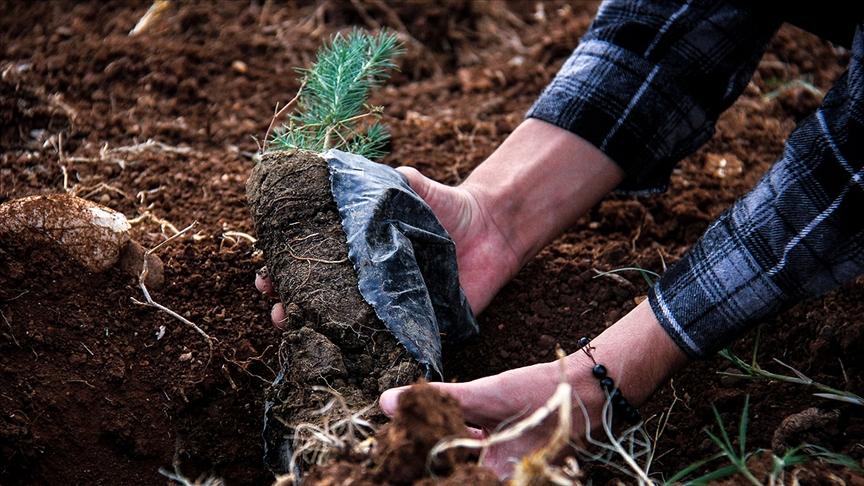 Yardım kuruluşlarından yanan ormanların yeniden yeşertilmesine destek