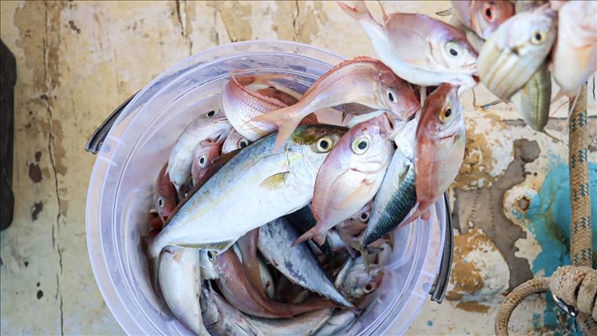 Mersin'de 'Akkuyu Olta Balıkçılığı Yarışması' düzenlendi