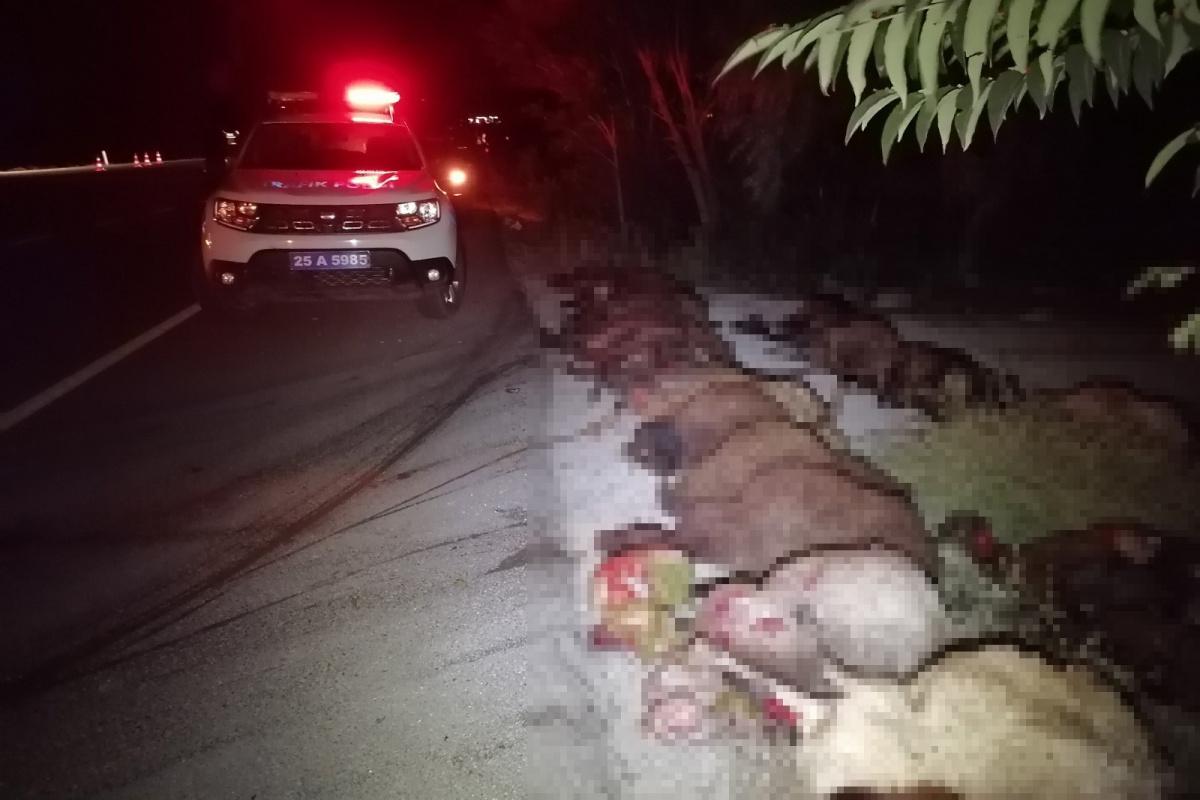 İki otomobil koyun sürüne çarptı: 40 koyun telef oldu