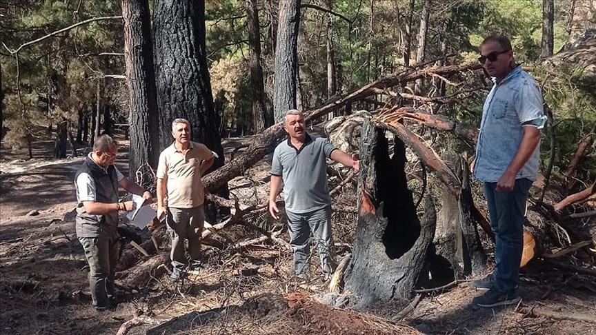 Muğla'da yanan ormanların yeniden canlanmaya başlaması arıcıları umutlandırdı