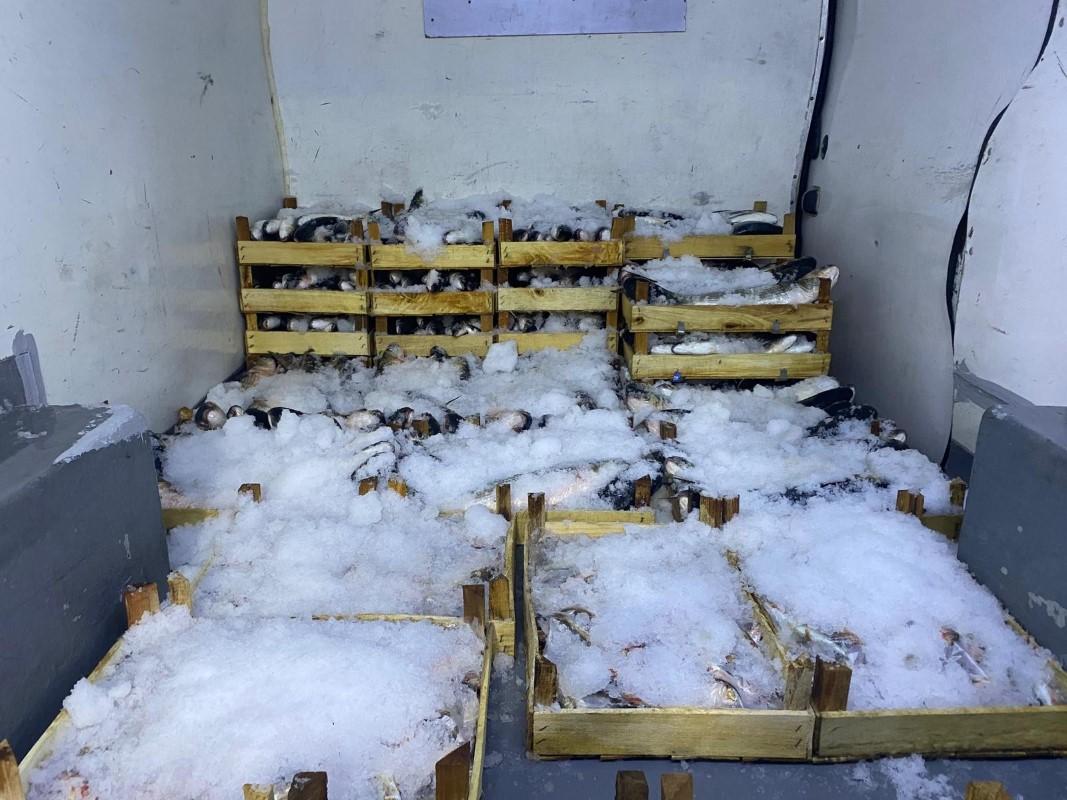 Tekneleriyle denize açılan balıkçılar 60 kasa barbun ve kefal tuttu