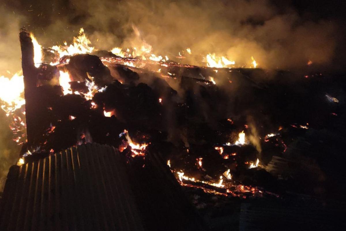 Besi çiftliği cayır cayır yandı, hayvanlar son anda kurtarıldı