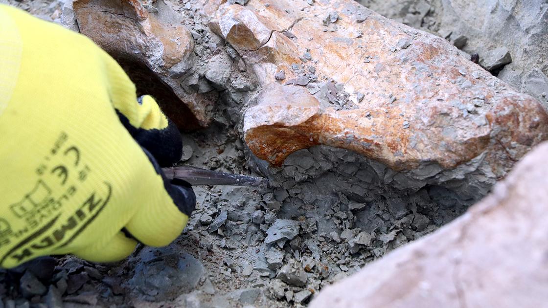 'Çorak Yerler'de 24 yılda 5 binin üzerinde fosil bulundu