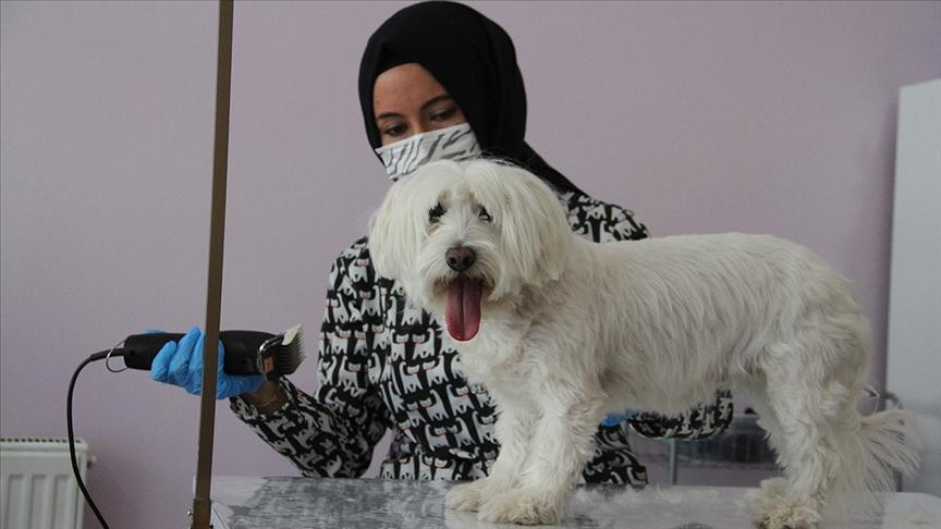 Devlet desteğiyle açtığı kuaför salonunda evcil hayvanları güzelleştiriyor