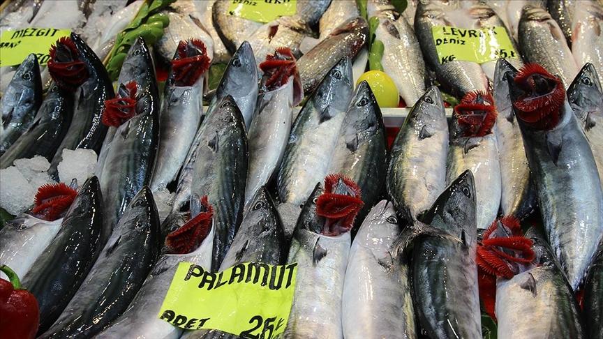 Çanakkale'de palamut bolluğu balıkçıların yüzünü güldürüyor