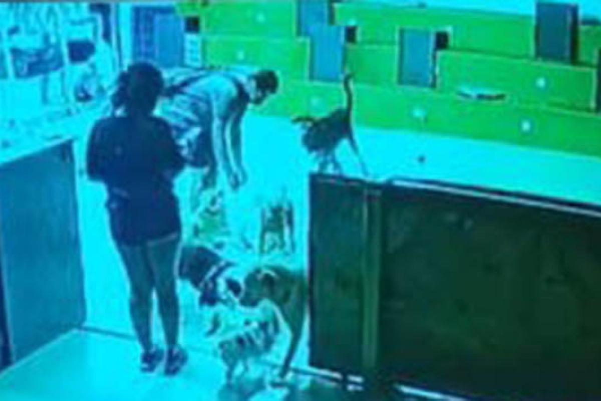 Köpek otelindeki ölüm savcılığa taşındı