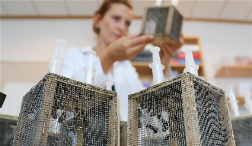 Çam balı üretimi için yanan bölgeleri 'Basra böceği' ile aşılama önerisi