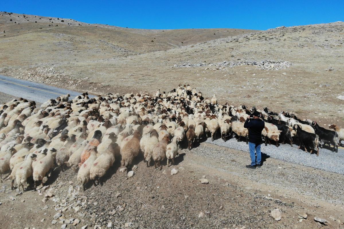 5 bin TL maaşla çalıştıracak çoban bulunamıyor