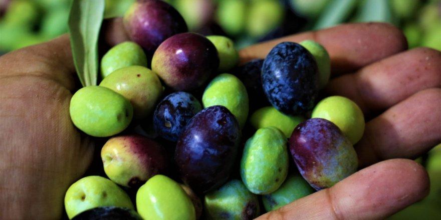 Tescille önü açılan Mut zeytinyağı Avrupa'ya ihraç edilmeye başlandı