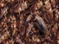 Kapasite iki katına çıktı, pislikten fareler ve hamam böcekleri bastı