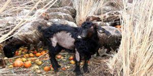 Hayvanseverler isyan etti, sahibinin savunması pes dedirtti