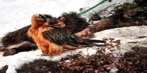 Fotokapana yakalandı ! Türkiye'deki en gizemli kuş böyle görüntülendi
