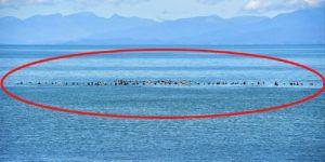Balinalar kıyıya dönmesinler diye denizde beklediler