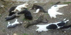 Tam bir vahşet! Bir günde 30 kediyi katlettiler