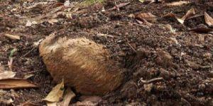 Hayvan leşleri çıkan kedi köyüne 54 bin lira ceza kesildi