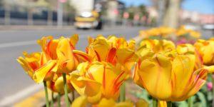Diyarbakır çiçek bahçesine dönüştü