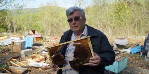 Kış uykusundan uyanan ayılar, 120 arı kovanını parçaladı