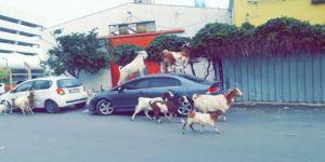 İzmir'de İlginç Görünüler