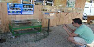 Dünyanın İlk Çene Protezli Caretta Carettası Müzede
