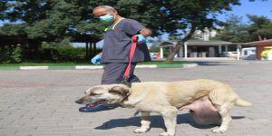 Sokak Köpeğine Tümör Ameliyatı