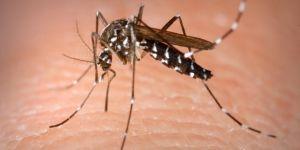 Sivrisinek ısırığı hayatını karattı