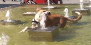 Sıcaktan Bunalan Köpeğin Fıskiye İle İmtihanı