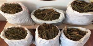Bitlis'te 46 Kilo Esrar Ele Geçirildi