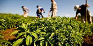 Çinliler ile Çaykur ortak fabrika kurdu