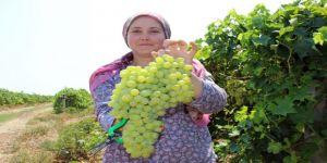 Üzüm Üreticisinin Fiyat Beklentisi 5 Liranın Üzerinde
