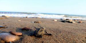 55 Bin Yavru Denizle Buluştu