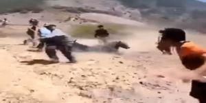 Barzani'nin Peşmergelerine Ayı Saldırdı
