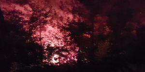 8 Dönüm Ormanlık Alan Yandı