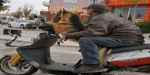Motosiklet Sürücüsü Köpeği İle Böyle Seyahat Etti