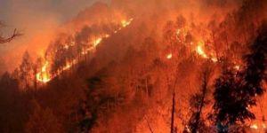 Kasım Ayında 52 Orman Yangını Çıktı